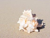 在海滩的巧克力精炼机壳 免版税图库摄影
