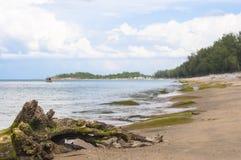 在海滩的干树根 库存图片