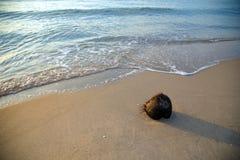 在海滩的干椰子与长的阴影 库存照片