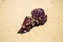 在海滩的干燥叶子 免版税图库摄影
