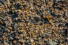 在海滩的弹片 免版税库存照片