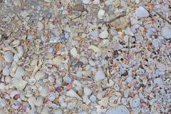 在海滩的微小的壳,接近的看法 免版税库存图片
