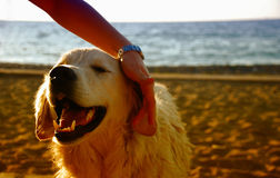 在海滩的愉快的狗 免版税图库摄影