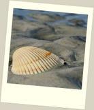 在海滩的扇贝壳在偏正片框架 库存图片