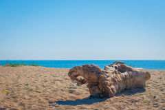 在海滩的断枝 黎明在乌克兰 库存图片