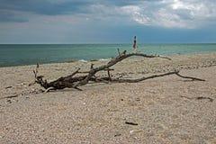 在海滨的断枝 图库摄影