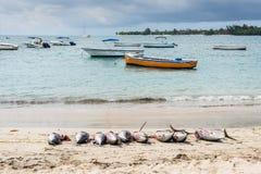 在海滩的新鲜的金枪鱼 库存图片