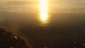 在海滩的日出有海景和巨大的波浪 鸟瞰图 股票视频