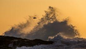 在海洋的日出 开普敦 错误的海湾 非洲著名kanonkop山临近美丽如画的南春天葡萄园 免版税库存图片