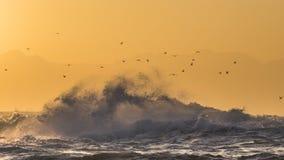 在海洋的日出 开普敦 错误的海湾 非洲著名kanonkop山临近美丽如画的南春天葡萄园 免版税库存照片