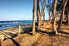 在海滩的日落与杉树 库存图片