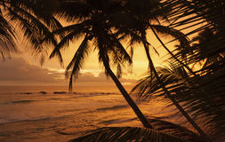 在海洋的日落在斯里兰卡 免版税库存图片