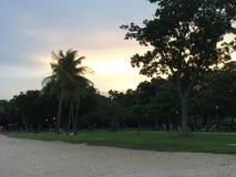 在海滩的日落,棕榈树 免版税图库摄影