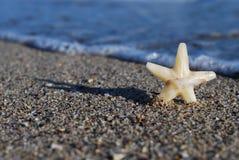 在海滩的星 免版税库存图片