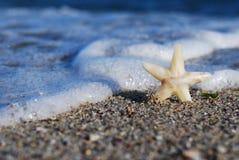 在海滩的星 免版税库存照片