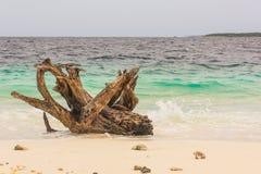 在海滩的木材 免版税库存图片