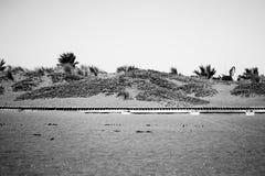 在海滩的木路 免版税库存照片