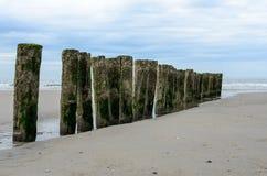 在海滩的木防堤在Nieuw Haamstede西兰省 免版税库存照片