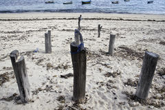 在海滩的木系船柱 图库摄影