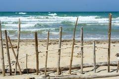 在海滩的木头 图库摄影