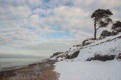 在海滨的杉木 美好的冬天海景 在海运somethere塔林附近的波儿地克的爱沙尼亚 免版税库存照片