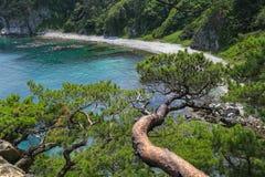 在海滨的杉树 免版税库存照片