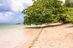 在海滩的树在考艾岛, Hawai 免版税库存照片
