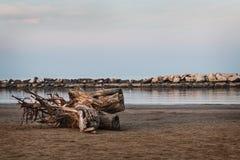 在海滩的树干 免版税库存图片