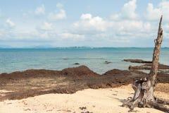 在海滩的树桩海岛在泰国 免版税库存图片