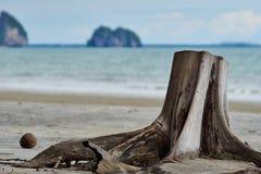在海滩的树桩 免版税库存图片
