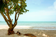 在海滩的树 库存图片