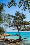 在海滩的树 免版税图库摄影