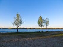 在海滩的树 免版税库存照片
