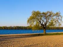 在海滩的树 免版税库存图片