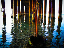 在海滩的桥梁下 库存图片