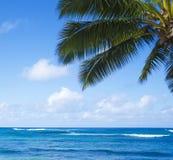 在海洋的棕榈叶 免版税库存图片