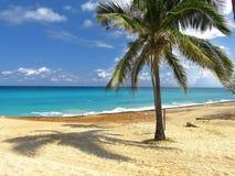 在海滩的棕榈树古巴 免版税图库摄影
