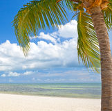 在海滩的棕榈树在基韦斯特岛佛罗里达 免版税库存照片