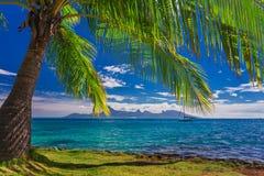 在海滩的棕榈树在塔希提岛有Moorea海岛看法  免版税库存图片