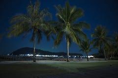 在海滩的棕榈树在晚上 库存图片