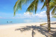 在海滩的棕榈树在槟榔岛,马来西亚 库存照片