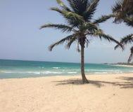 在海滩的棕榈树在波多黎各 库存照片