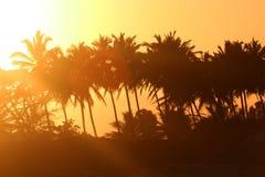 在海滩的棕榈树在美好的日落期间 库存照片