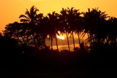 在海滩的棕榈树在美好的日落期间 免版税库存图片