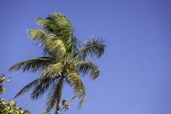 在海滩的棕榈树在那不勒斯,佛罗里达 免版税库存图片