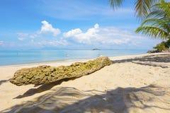 在海滩的棕榈树树干在槟榔岛,马来西亚 图库摄影
