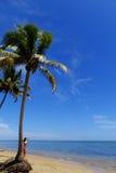 在海滩的棕榈树,瓦努阿岛海岛,斐济 免版税图库摄影