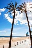 在海滩的棕榈树 图库摄影
