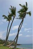 在海滨的棕榈树 库存照片