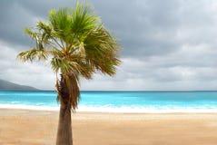 在海滩的棕榈 库存照片